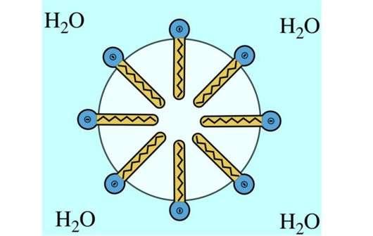 Schematisches Aussehen einer Mizelle, aus Wikipedia, https://de.wikipedia.org/wiki/Mizellen#/media/File:Y%C3%BCzeyi_akif_maddelerin_temiz_sudaki_hali._(Dairemsi)_V2.png