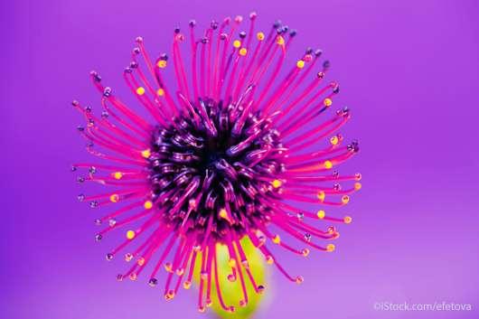 Exotische Blume auf ultra violettem Hintergrund - ©iStock.com/efetova