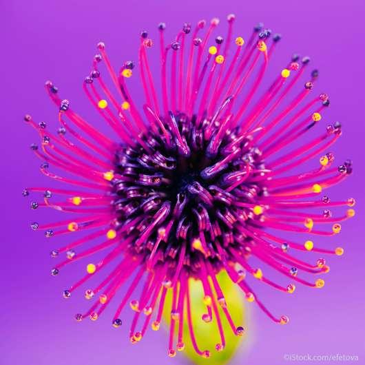 Ultra Violet: Der Farb-Coup im Kosmetik-Markt